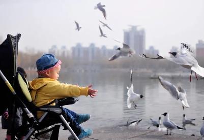 银川,候鸟天堂!