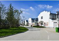 安徽泗县:聚焦乡村振兴   描绘美丽乡村新画卷