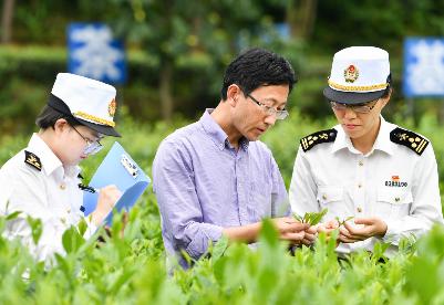 一季度贵州茶叶出口总值2236万元 同比增长24.1%