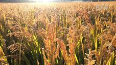 储备充足价格稳定 国际市场对中国粮食供应影响小