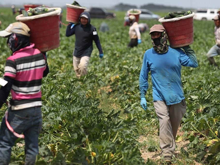 保护美国农场工人远离新冠病毒以保障食物供应