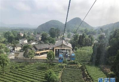 人均一亩茶 如此富万家——贵州凤冈茶产业的嬗变
