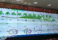 安徽怀远:高新技术运用小麦种植全过程 60万亩小麦丰收在望