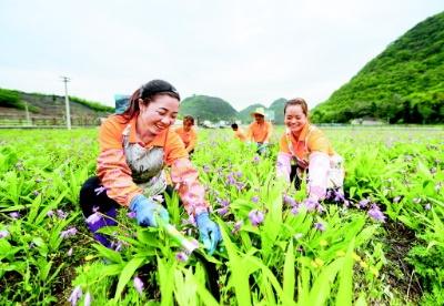 把生态优势转化成健康医药产业发展优势