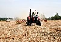 安徽阜阳颍东区:收割打捆麦客忙