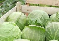 2020年1-5月白俄罗斯农产品和食品出口增长4.4%