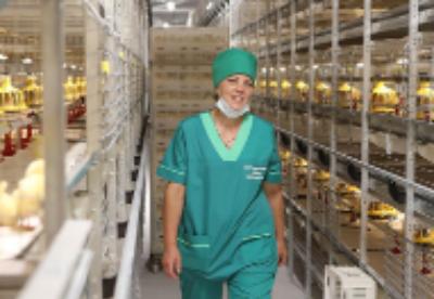 """白俄罗斯禽肉企业""""白石油—奥索宾诺""""打算扩大对亚洲的出口"""
