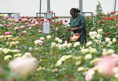 农产品或成肯尼亚对华出口增长关键