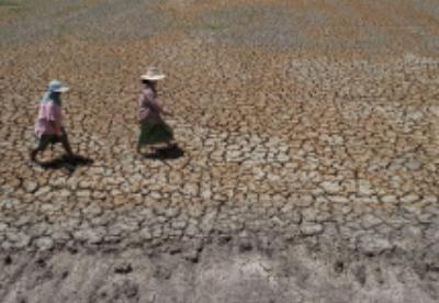 干旱少雨致泰国农耕经济损失760亿