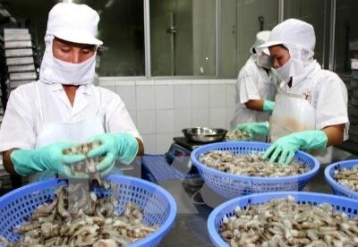 越南对欧盟虾类出口猛增