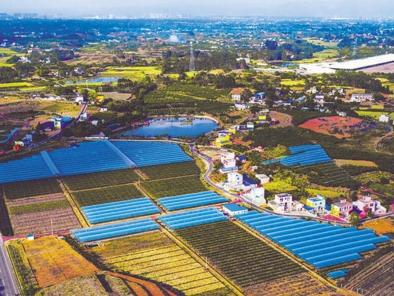 扛起农业对外开放大旗 谱写成都青白江乡村振兴新篇章