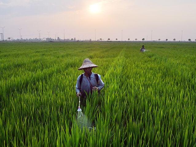 打破东盟农产品的非关税壁垒