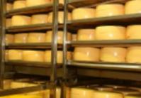 牛奶占白俄罗斯农产品出口的40%以上