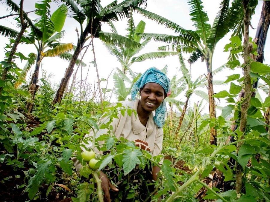 实现全球粮食安全之路