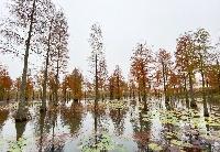 水中有林 林中有鸟 中国·安徽第四届来安池杉湖国际观鸟周启动