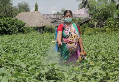印专家称疫情对粮食体系中女性的影响更大