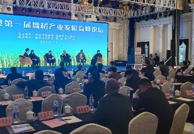 安徽怀远举办第一届糯稻产业发展高峰论坛