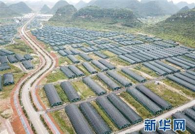 贵州食用菌产业助农就业增收
