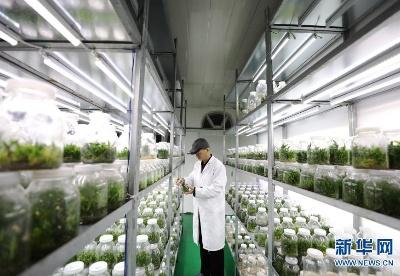 贵州江口:铁皮石斛全产业链促就业