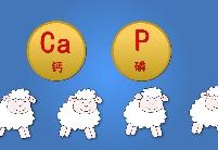 """【""""数""""说甘味小课堂】来一起看看环县滩羊""""优中特""""的""""名场面"""""""