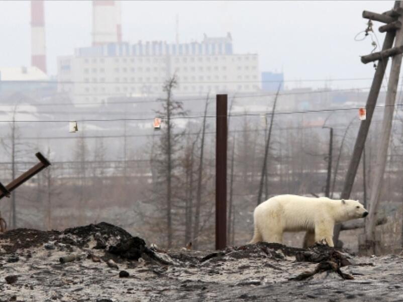 俄罗斯谁负责缓解气候变化的影响
