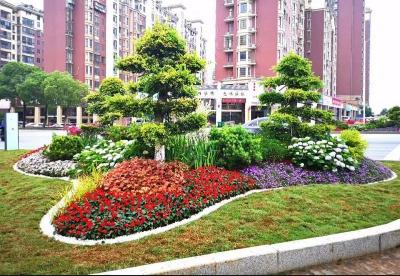 蚌埠龙子湖区:加快推进绿化提升工程建设