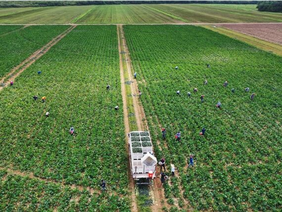 促进适应气候变化的农业和农村信贷