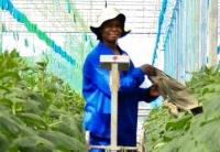 """""""无烟工业""""在非洲创造就业的潜力"""