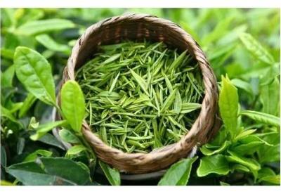 贵州省茶产业发展大会在贵阳召开