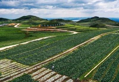 贵州蔬菜产业进入全国第一梯队