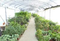 安徽埇桥区:立足花卉产业优势 实现乡村振兴新突破