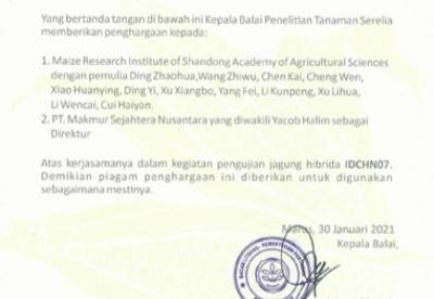 山东选育的4个玉米新品种通过印度尼西亚国家审定