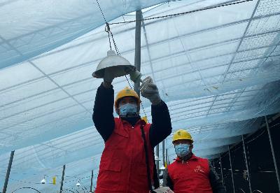 """宿州供电:电力赋能打造乡村产业  振兴""""果蔬小镇"""""""