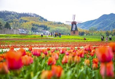 河南信阳:三月春风来 正是赏花时