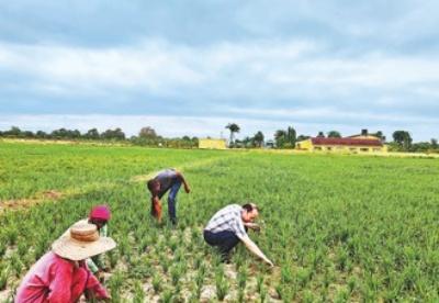 中坦农业技术合作结硕果