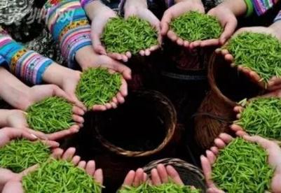 2021年贵州茶产业十佳评选结果将于茶产业博览会揭晓