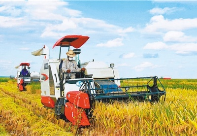 中国在非最大水稻种植项目再迎丰收