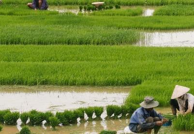 G20:粮食(不)安全的含义及其重要性