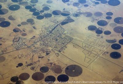 海湾阿拉伯国家的粮食安全政策