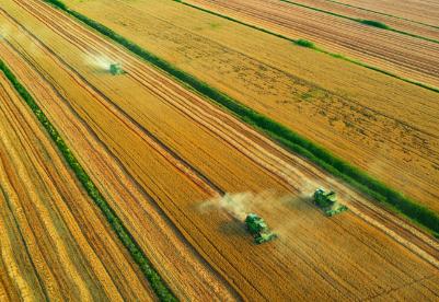 安徽沿淮小麦最高单产在蚌埠诞生