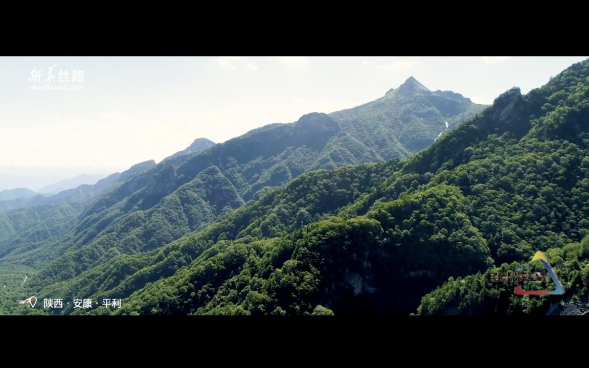 《老冯寻宝》第一季《秦岭茶记》安康平利篇