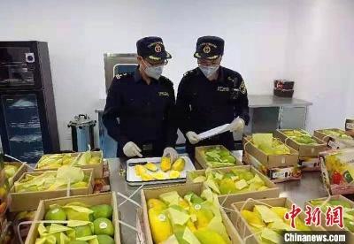 中国首次通过货运包机从巴基斯坦进口芒果