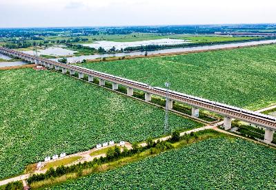蚌埠淮上区:以荷为媒    绘就乡村振兴美丽画卷