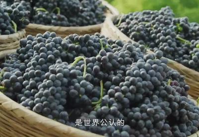 中国葡萄酒 当惊世界殊