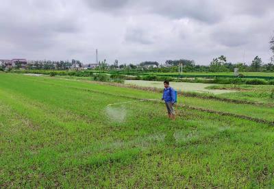 安徽泗县高效推进农田建设民生工程