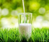 China makes progress in reviving dairy industry: official