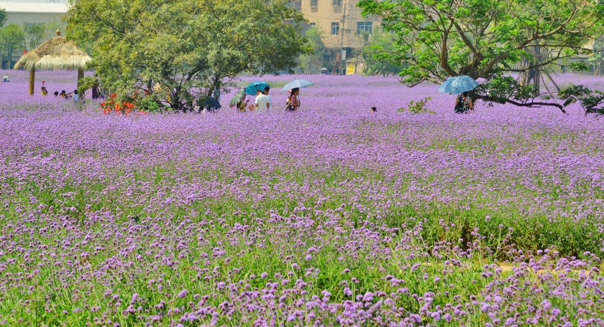 Spring Comes in Wulin, Jinjiang