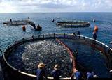 海南休闲渔业蓄势谋突破