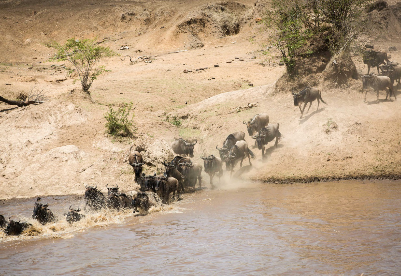 """动物大迁徙""""重头戏""""拉开序幕 肯尼亚旅游业能否迎来""""疫后重生""""?"""