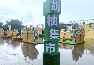 浙江常山youyou音乐节撬动乡村旅游经济
